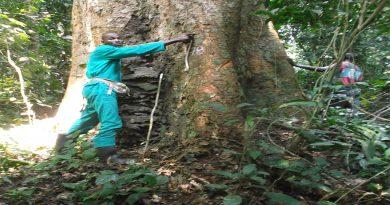 Direction Inventaire et Aménagement Forestiers (DIAF).
