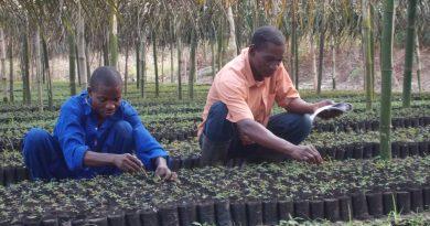 Direction de Reboisement et Horticulture (DRHo)