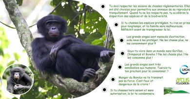 Textes légaux sur la conservation des grands singes en RDC