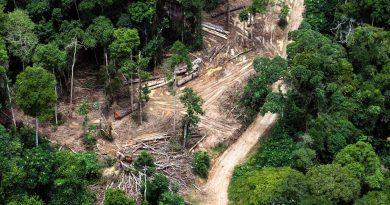 Récupération - réattribution illégale des concessions forestières par Claude Nyamugabo, la CNCEIB invite Bazaiba a remettre de l'ordre dans le secteur