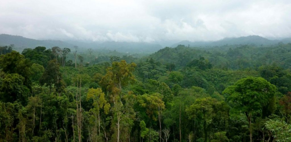 La République Démocratique du Congo est le seul pays du Bassin du Congo à observer le moratoire pendant plus de 18 ans et de ce fait, aggravant sensiblement la production dans l'exploitation forestière industrielle.